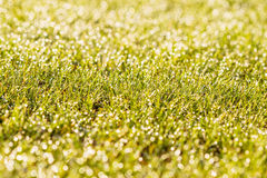 Dewy grass with blurred background Stock Photos
