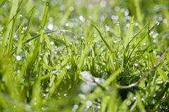 Dewy Grass at Ground Level Stock Photography