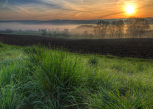 Dewy grass at sunrise with fog Stock Photos