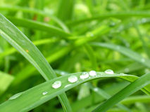 Dewy Green. Macro of dew drops on blades of grass stock photography