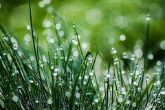 Dewy green grass, blurred background Stock Photography