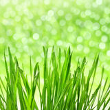 Dewy green grass Stock Photography