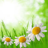 Dewy green grass Stock Image