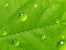 Dewy leaf Stock Photo