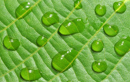 Dewy leave Royalty Free Stock Photos