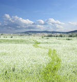 Dewy meadow and blue sky Royalty Free Stock Images