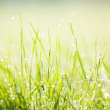 Dewy morning grass Stock Photo