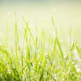 Dewy morning grass Stock Photo