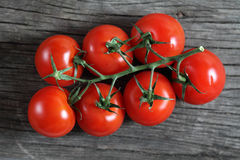Dewy red tomatoes Stock Image
