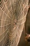 Dewy spider web Stock Photo