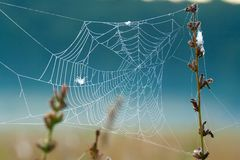 Dewy spider web Stock Photography