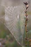 Dewy spider web Royalty Free Stock Photos