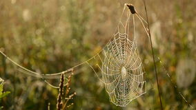 Dewy spider web on autumn grass Royalty Free Stock Photography