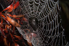 Dewy spider web royalty free stock images