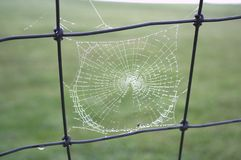 Dewy spiderweb hangs on a fence. Spiderweb with morning dew illuminated by the sun Royalty Free Stock Photo
