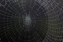 Dewy Spiders Web Royalty Free Stock Image