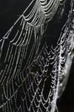 Dewy spiderweb lizenzfreie stockfotografie