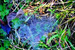 Dewy spiderweb. In the grass Royalty Free Stock Images