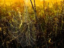 Dewy Spiderweb Lizenzfreies Stockbild