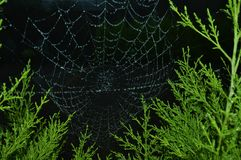 Dewy Spiderweb Royalty Free Stock Photography