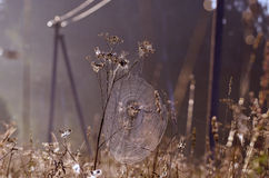 Dewy summer end spider-web on farmland field Stock Photos