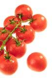 The Dewy Tomato Stock Image