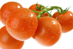The Dewy Tomato Royalty Free Stock Images