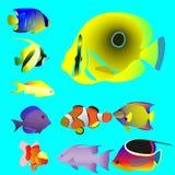 Dez peixes pequenos oceânicos brilhantes Fotografia de Stock Royalty Free