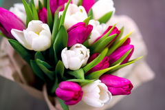 Dez tulipas brancas e dez cor-de-rosa Foto de Stock Royalty Free