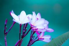 Deze bloem heeft een paar kleuren stock fotografie