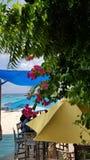Deze Kleuren zullen u houden van de Warmte van stadium de Caraïben raken royalty-vrije stock foto's