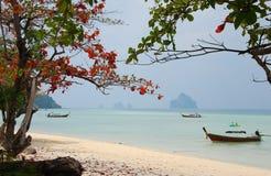 Koh Kradan paladise Thailand Stock Fotografie