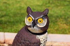 Deze uil heeft een dicht oog op de tuin al zomer gehouden stock fotografie