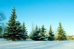 Dezember-Tannenbäume mit Schnee Lizenzfreie Stockfotografie