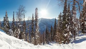 Dezember-Winterreise zur Reserve Kuznetsk Alatau auf Skis Russland stockbild