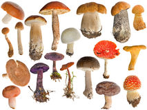 Dezenove coleções dos cogumelos isoladas no branco fotografia de stock