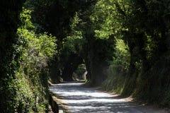 A mystical road