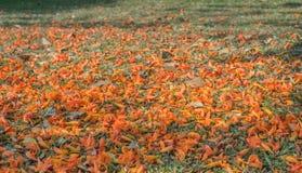 dhak bloem op dagtijd Royalty-vrije Stock Fotografie