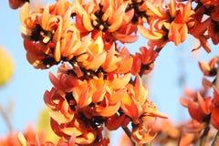 Dhak Royalty Free Stock Image