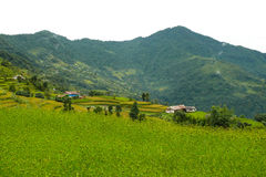Dhampus village between rice fields, Nepal Royalty Free Stock Photos