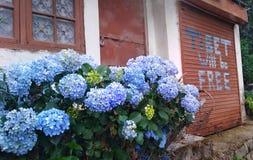 Dharamsala, Himachal Pradesh/la India - 17 06 2018 TTibet será casa libre de las flores foto de archivo