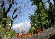 Dharamsala himalayas and orange flowers blooms. Orange spring flowers with  himalayan mountain background Royalty Free Stock Photos