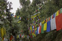Colored Buddhist flags with mantras in the forest. Dharamshala, Mcleodganj, Himachal Pradeh/ India - 09.06.2018: Near Dalai lama temple. Colored Buddhist flags royalty free stock image