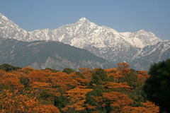 Dhauladhar Himalayas view from Tea Garden Stock Photos
