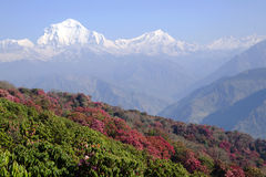Dhaulagiri berg i sommar, Himalaya Arkivbild