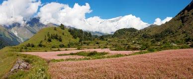 Dhaulagiri himal with buckwheat field. View from annapurna himal to dhaulagiri himal with buckwheat field stock image