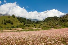 Dhaulagiri himal with buckwheat field. Mount Dhaulagiri - view from annapurna himal to dhaulagiri himal with buckwheat field near Kali Gandaki river Nepal royalty free stock photo
