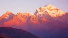 Dhaulagiri Mountain In Nepal With Sunrise. Closeup Photo of Mt. Dhaulagiri in Nepal. Sunrise Reflection in Mountain stock photography
