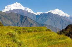 Dhaulagiri and paddy-field. View of dhaulagiri and paddy-field royalty free stock photography