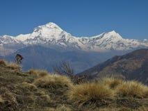 Dhaulagiri and Tukuche Peak Stock Photos